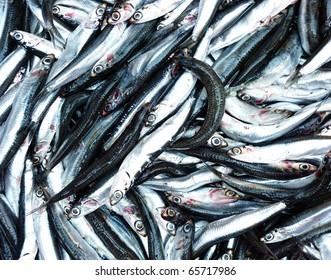 anchovies fresh fish closeup