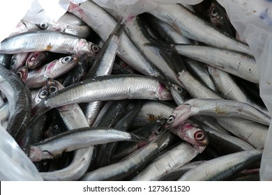 anchovy fish, black sea anchovy,