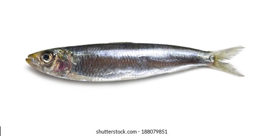 anchovy with shadow isolated on white.