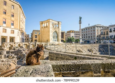Ancient amphitheater and cute cat in city center of Lecce, Puglia, Italy