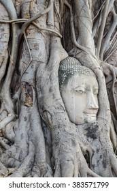 Ancient buddha head embeded in banyan tree from Ayutthaya,Thailand