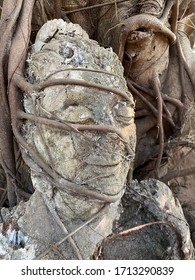 Ancient Buddha Head Statue in Tree roots