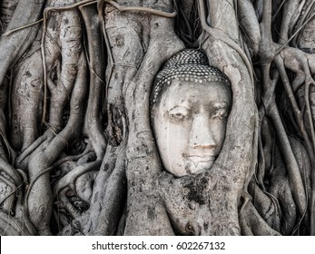 Ancient Buddha Statue in tree roots at Ayuttaya, Thailand.