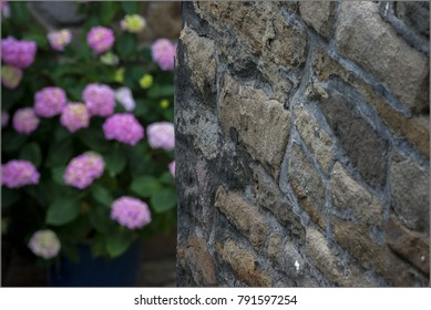 Ancient castle wall and pink flowers in the background. Germany. Spring