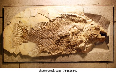 Ancient fish fossil on yellow stone background
