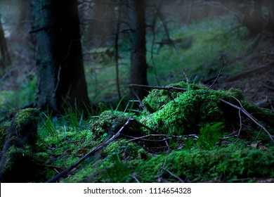 Ancient forest with stones covered by green moss.Wild and dark woodland in Wales Uk.Natural environment.Healthy ecosystem.British wilderness.Snowdonia National Park, north west uk.Mist in woodland.