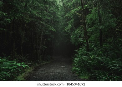 Ancient forests in Vancouver Island. Beautiful trees and mossy forests with tall trees.