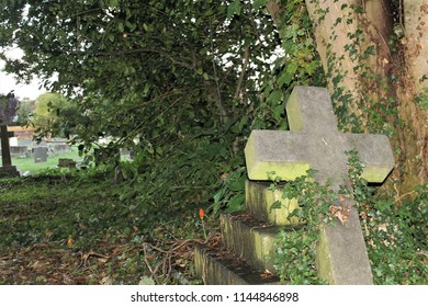 Ancient gravestones. Broken stone cross in foreground. Overgrown with ivy. Deadly nightshade growing nearby.