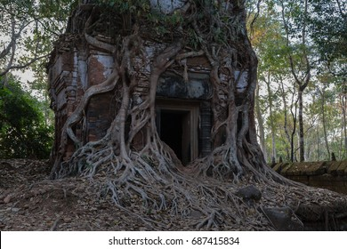 Ancient Hindu temple covered by tree roots in Koh Ker, former capital of Khmer empire, now a remote archaeological site in jungle outside of Angkor Wat, Siem Reap, Cambodia