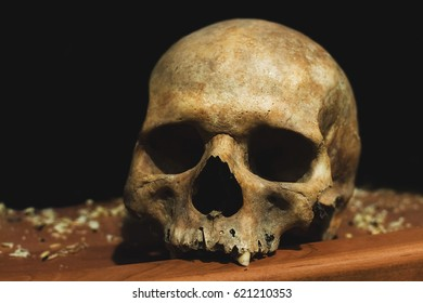 Ancient human skull on the table, on the shelf, history, occultism, life and death, the rule of life, the other world, the paranormal phenomenon, the spirit