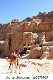 in the ancient Nabataean ruin of Petra, Jordan, a lone camel walks past hand carved caves in the hillside