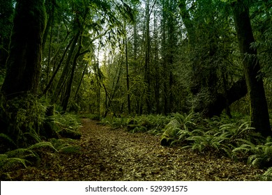 Ancient Rain Forest in Vancouver Island series - Deep forest Pathway 1.