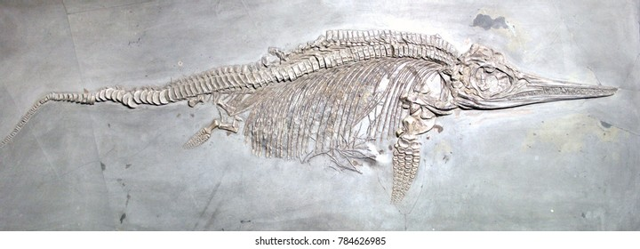 Ancient reptile fossil on grey stone background