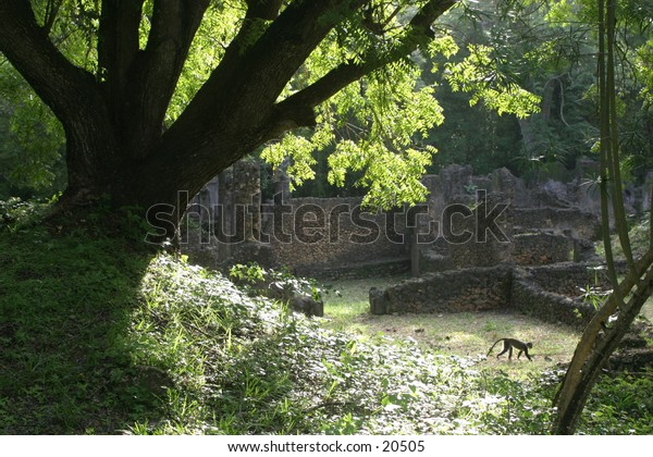 Ancient Ruins of Arab Town with Monkey