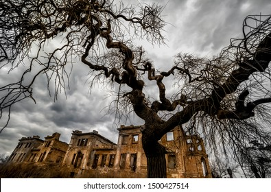 The ancient ruins of the mansion and a tree with curved bizarre branches. Mystical scary fabulous photo. Halloween celebration.