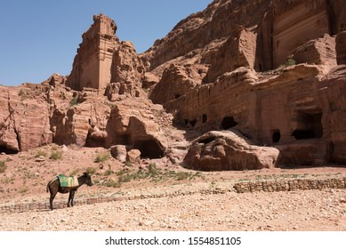 Ancient ruins and one donkey in  hidden city Petra, Jordan