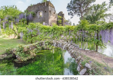 Ancient ruins and plants of wisteria in the Garden of Ninfa in the province of Latina, Italy, Europe.