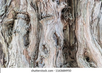 ancient sandalwood trunk closeup, old tree texture background