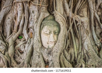 Ancient statue head of Buddha image embedded in a Banyan tree roots. The old Buddhism ruins at Wat Mahathat in Ayutthaya, Thailand, Southeast Asia.