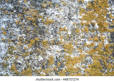 Ancient stone surface with moss. Old moss stone background.