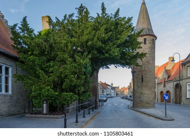 An ancient taxus baccata or European Yew tree stands beside the West Gate in the medieval town of Lo. The tree is a national monument of Belgium