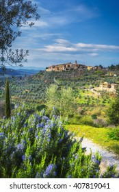 Ancient town on a hill with olive trees, Castelmuzio.