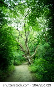 Ancient Tree at the Lost Gardens of Heligan, Cornwall UK