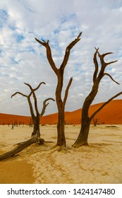 Ancient trees at Deadvlei, Namib National Park, Sossusvlei, Namibia
