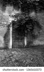 Ancient Venice Italy Doorway with Vine Overgrowth
