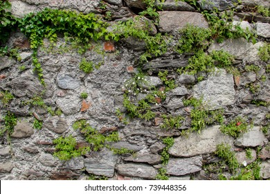 Ancient wall made of natural rocks with plants between blocks and camomile bunch in the middle