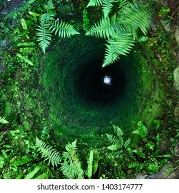 Ancient well. Stone walls of a well overgrew a green moss and a fern. Below water blackens, the bright patch of light gives similarity to an eye
