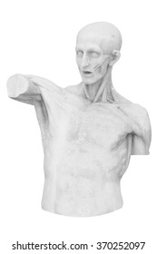 ancient white marble statue of an torso man isolate on white with clipping path