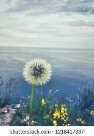 Ancona, Italy 20 July 2018: white flower in the foreground with background sea