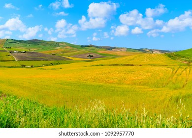 Andalusia countryside landscape, olive groves with wheat fields and beautiful sunny sky with white clouds, Spain