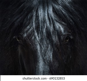 Andalusian black horse with long mane. Portrait close up. Can be used for decoration, interior print.