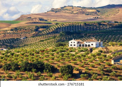 Andalusian cortijo (farmhouse) surrounded by olive groves in the province of Cadiz, Spain