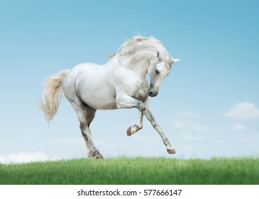 andalusian horse on meadeterenian hills