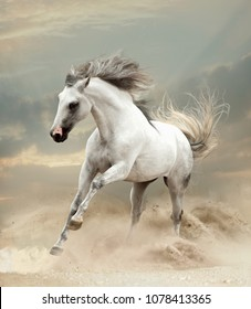 andalusian horse plays in the sand in desert