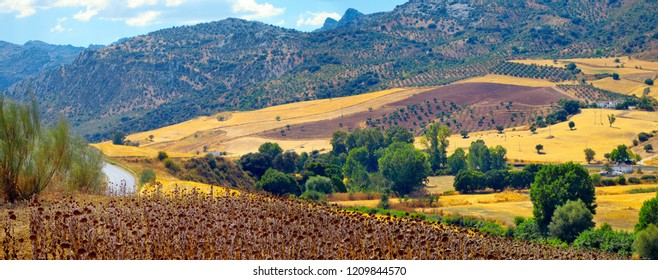 Andalusian landscape in Spain: fields, mountains and road.