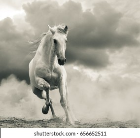 andalusian stallion running in the storm, front view