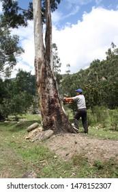 andean tree deforestation andes chainsaw