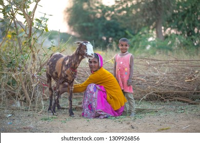 ANDOURE INDIA - 29 DECEMBER 2017: Nath community's woman gets goat's milk, The people of the community live by doing livestock work, ANDOURE INDIA - 29 DECEMBER 2017