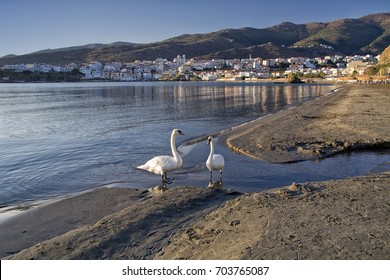 Andros island in Cyclades of Greece/Swans