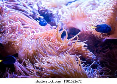 Anemone and Fish Swimming in ocean
