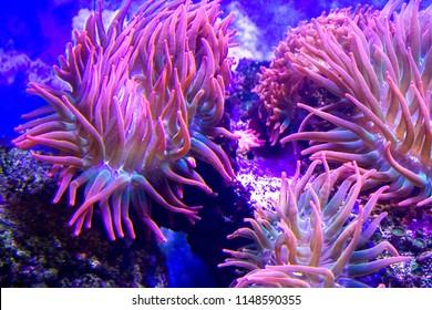 anemone reef ocean