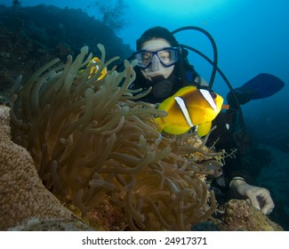 Anemonefish and Scuba Diver