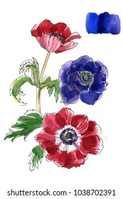 Anemones painted with watercolors on white background. Summer flowers. Watercolor Sketch. Wedding decorations.