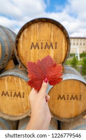 Anenii Noi, Moldova - November 2018: Autumn at Mimi Castle Winery in Moldova Republic. Woman holding red autumn vine leaf in front of Mimi Castle barrels