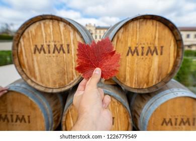 Anenii Noi, Moldova - November 2018: Autumn at Mimi Castle Winery in Moldova Republic. Man holding red autumn vine leaf in front of Mimi Castle barrels