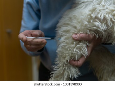 Anesthetic injection for the dog